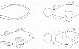 Курс о том, как нарисовать аквариум с рыбками
