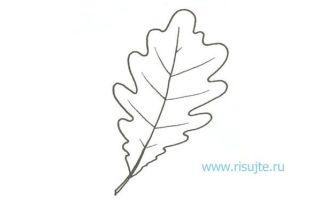 Урок о том, как нарисовать листья