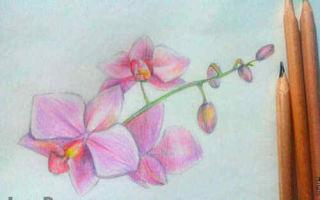 Уроки о том, как нарисовать орхидею