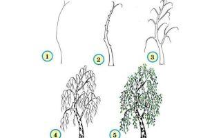 Разбираемся, как нарисовать деревья