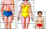 Какие пропорции фигуры человека?