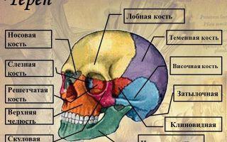 Урок о том, как нарисовать голову человека