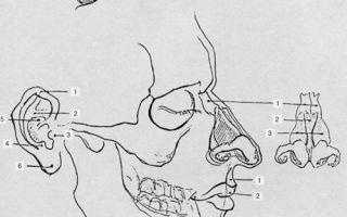 Как выучить анатомию человека для художников?