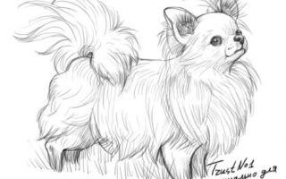 Урок о том, как нарисовать собаку