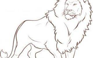 Урок о том, как нарисовать льва