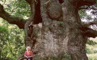 Как проходит рисование дерева в старшей группе?