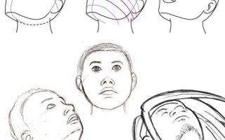 Какие пропорции лица человека?