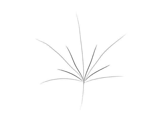 Как нарисовать кленовый лист карандашом