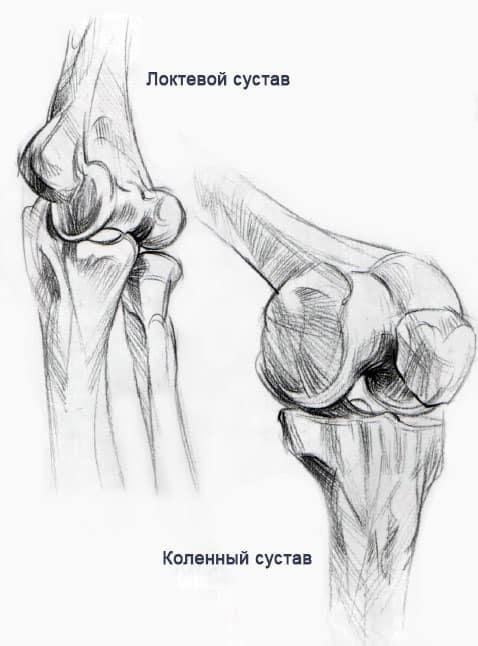 Анатомия и структура человека для художников. Мышцы и кости