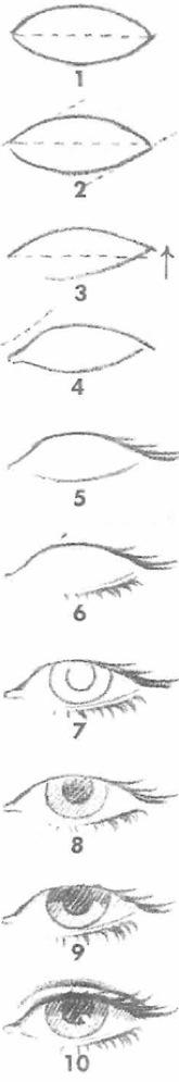 Как нарисовать голову человека? Пропорции головы и лица