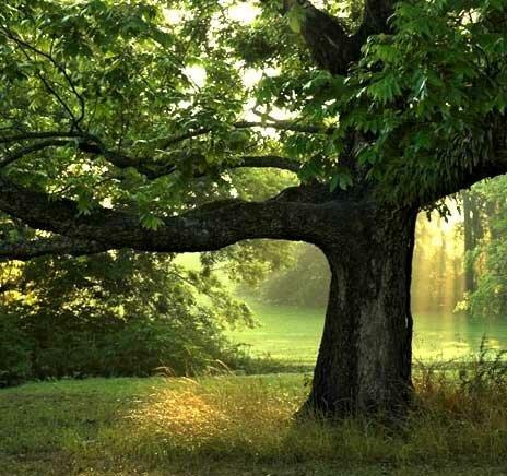 Как рисовать различные породы деревьев?