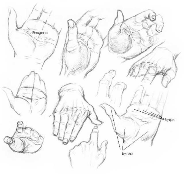 Анатомия кисти руки для художника