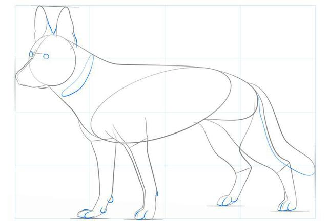 Как рисовать собаку? Рисунок немецкой овчарки карандашом